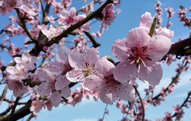 Spring Has Sprung at Terhune Orchards