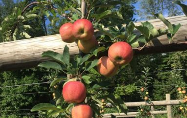 It's All About Apples and Animals at Terhune Orchards' Apple Days Harvest Festival