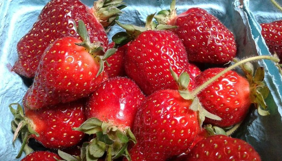 Pick Your Own Strawberries Continues New COVID Procedures this Season