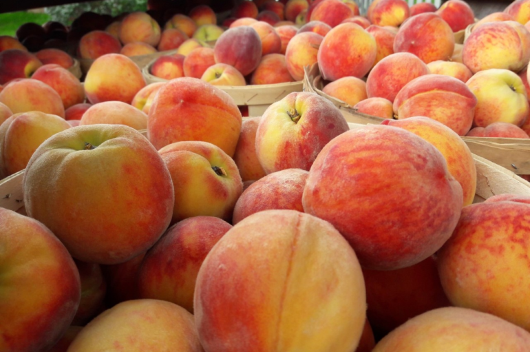 Abundance of Hearty Summer Produce at Terhune Orchards
