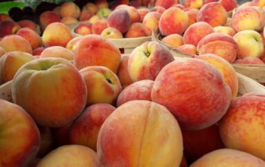 Everything is Peachy at Terhune Orchards